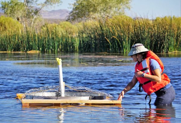 DRI researcher Gabrielle Boisrame, Ph.D., inspects a floating evaporation pan at The Nature Conservancy's 7J Ranch on September 18, 2019. Credit: Ali Swallow/DRI.