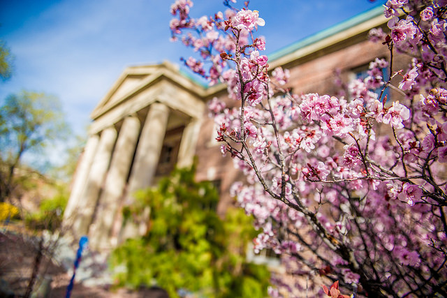 Spring on campus at UNR